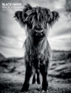 Black White Photography 245